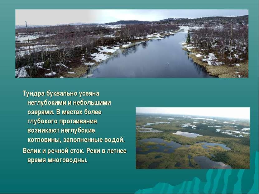 Тундра буквально усеяна неглубокими и небольшими озерами. В местах более глуб...