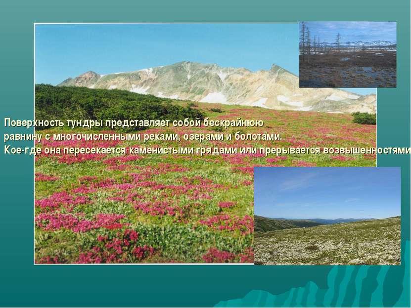Поверхность тундры представляет собой бескрайнюю равнину с многочисленными ре...