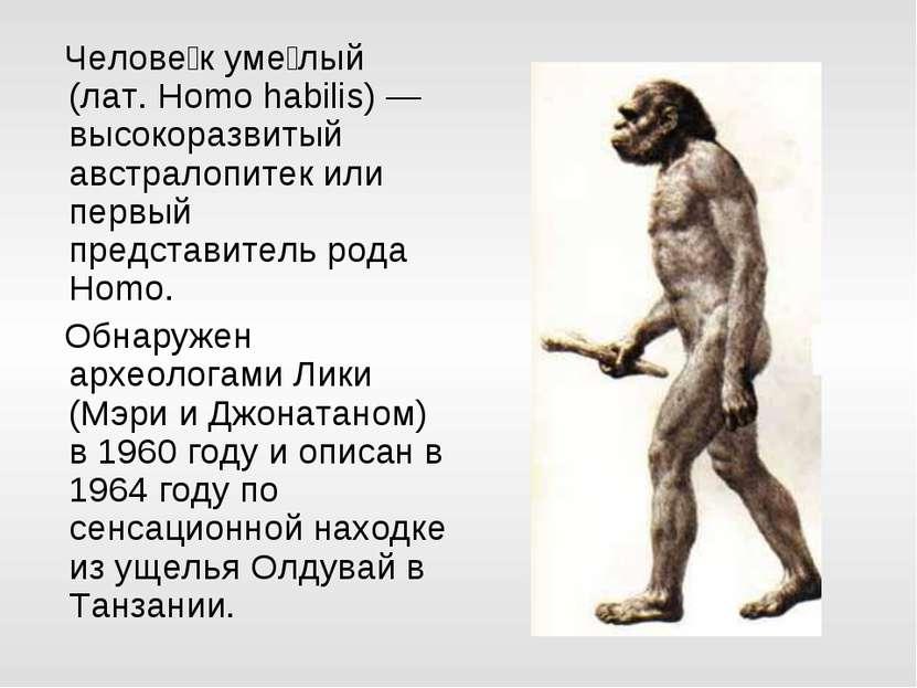 Челове к уме лый (лат. Homo habilis) — высокоразвитый австралопитек или первы...