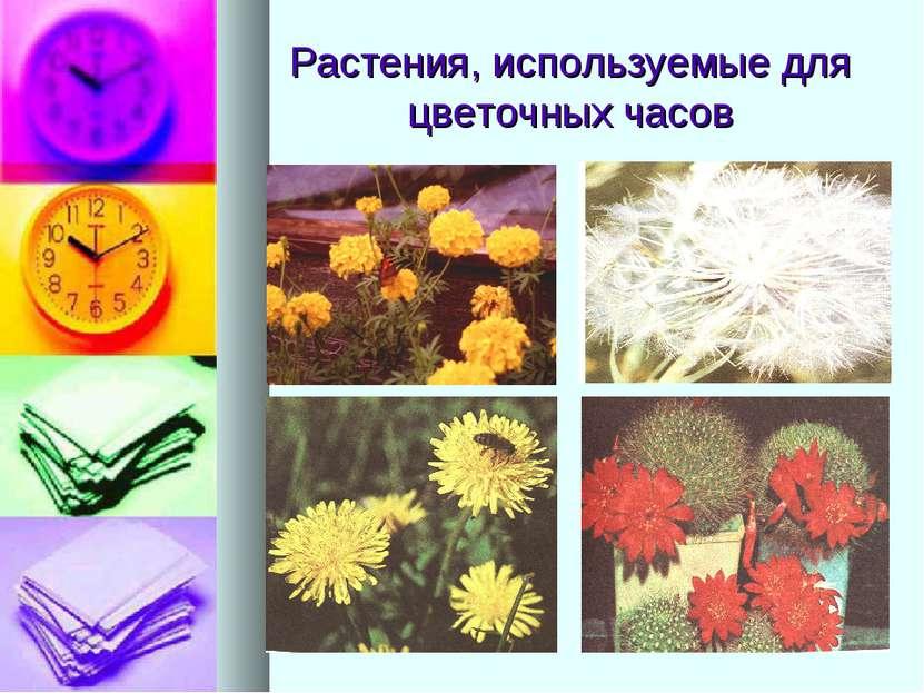 Растения, используемые для цветочных часов