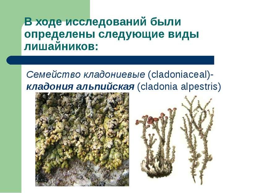 В ходе исследований были определены следующие виды лишайников: Семейство клад...