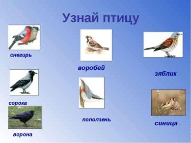 Узнай птицу снегирь зяблик ворона сорока воробей поползень синица