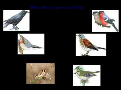 Назовите знакомых птиц