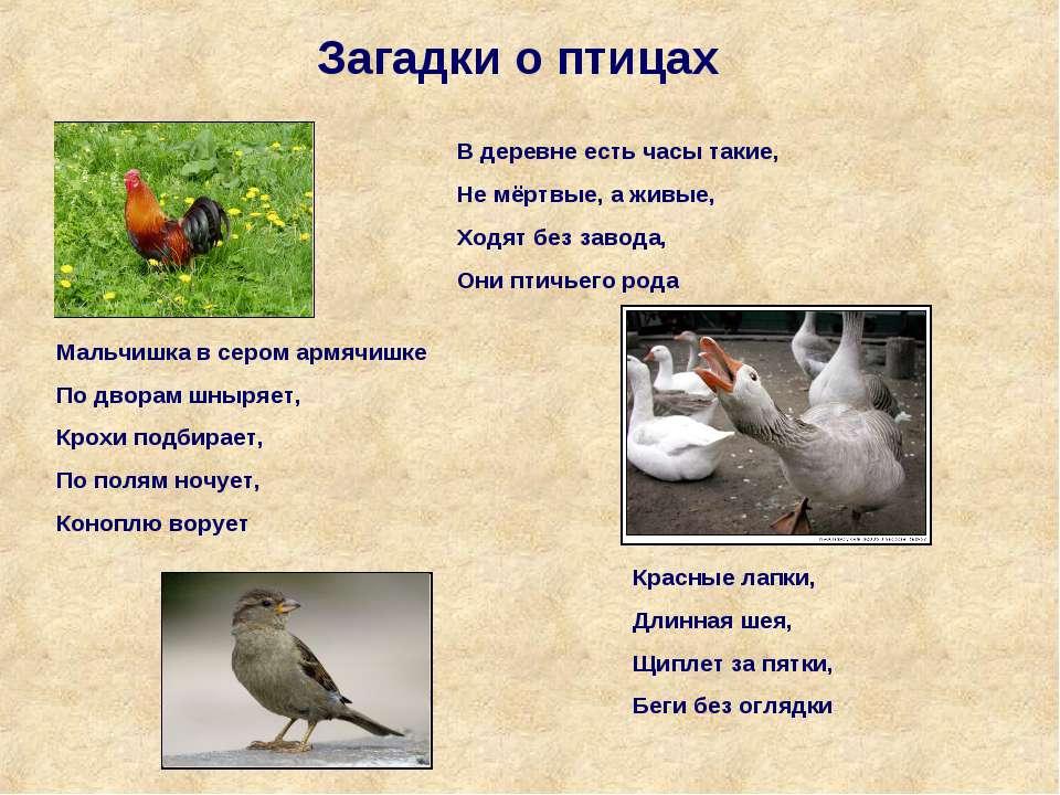 Загадки о птицах В деревне есть часы такие, Не мёртвые, а живые, Ходят без за...