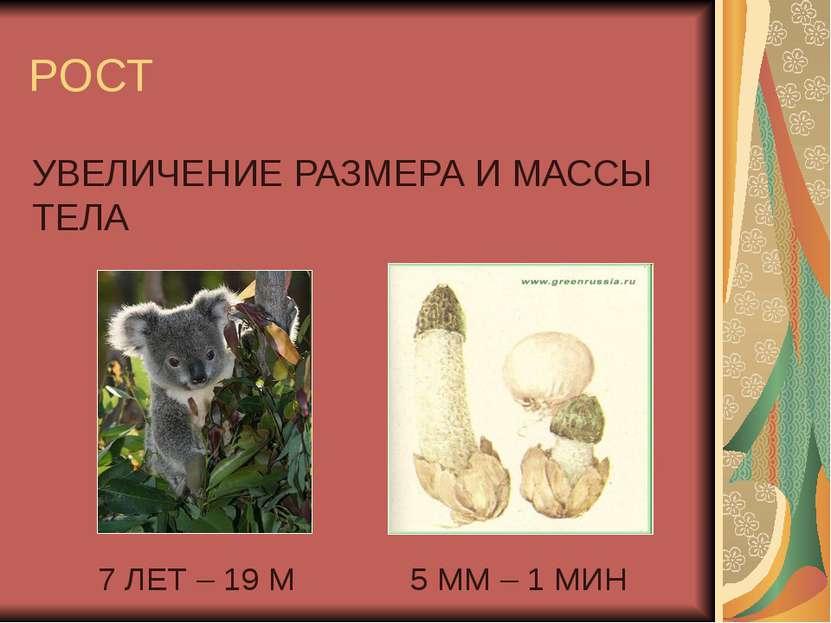 РОСТ УВЕЛИЧЕНИЕ РАЗМЕРА И МАССЫ ТЕЛА 7 ЛЕТ – 19 М 5 ММ – 1 МИН