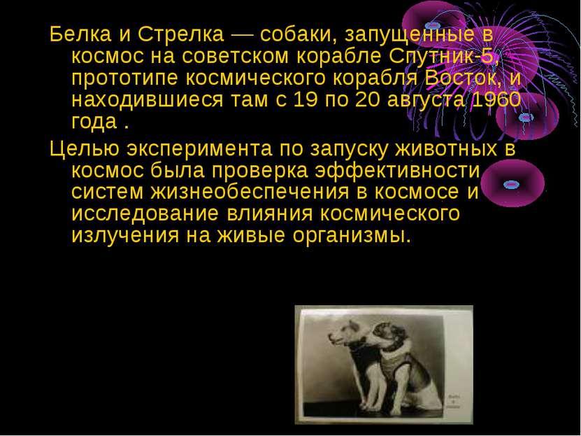 Белка и Стрелка — собаки, запущенные в космос на советском корабле Спутник-5,...