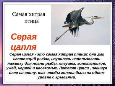 Серая цапля - это самая хитрая птица: она ,как настоящий рыбак, научилась исп...