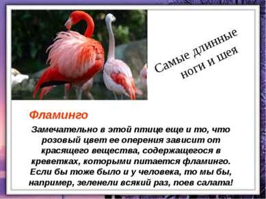 Замечательно в этой птице еще и то, что розовый цвет ее оперения зависит от к...
