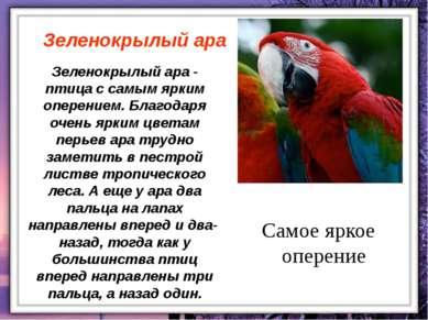 Зеленокрылый ара - птица с самым ярким оперением. Благодаря очень ярким цвета...