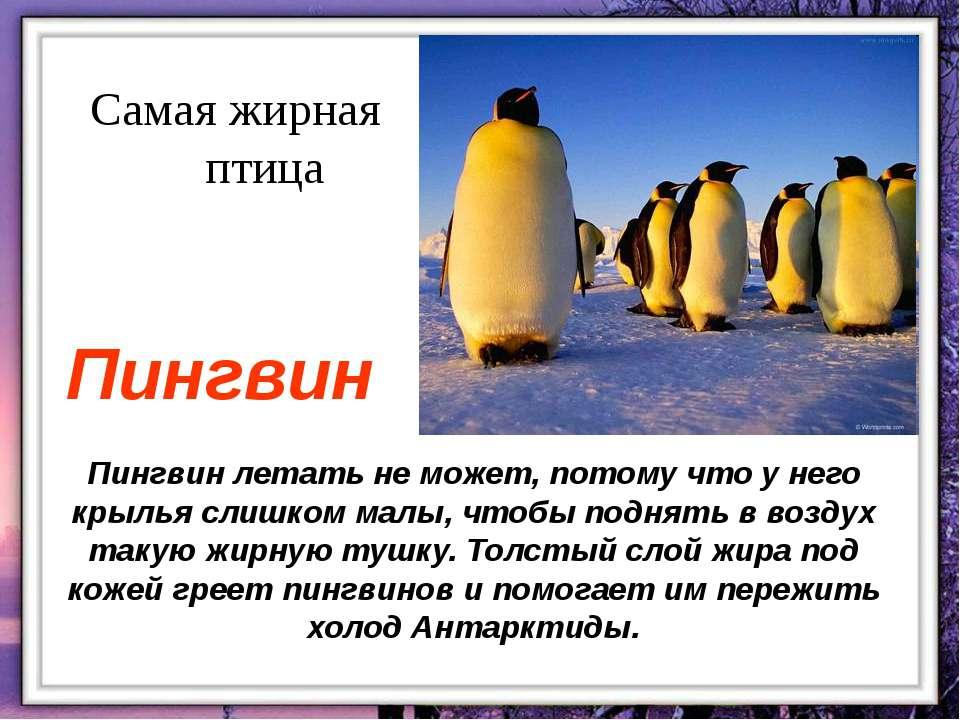 Пингвин летать не может, потому что у него крылья слишком малы, чтобы поднять...