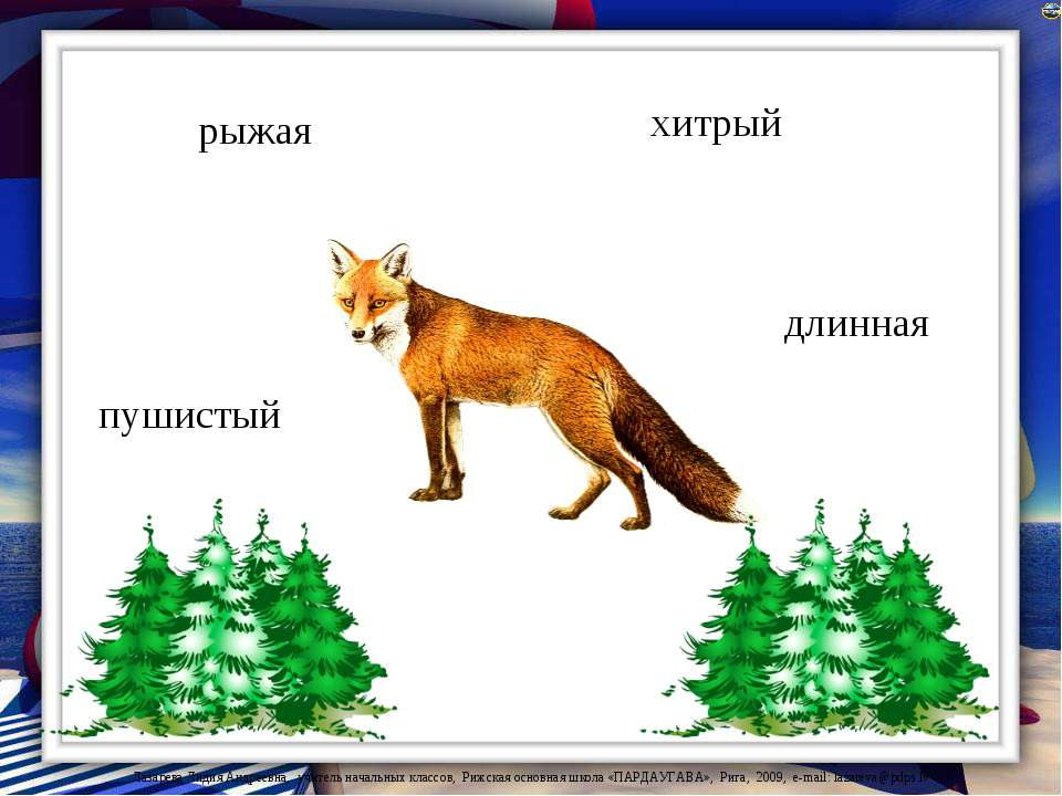 рыжая пушистый длинная хитрый Лазарева Лидия Андреевна, учитель начальных кла...