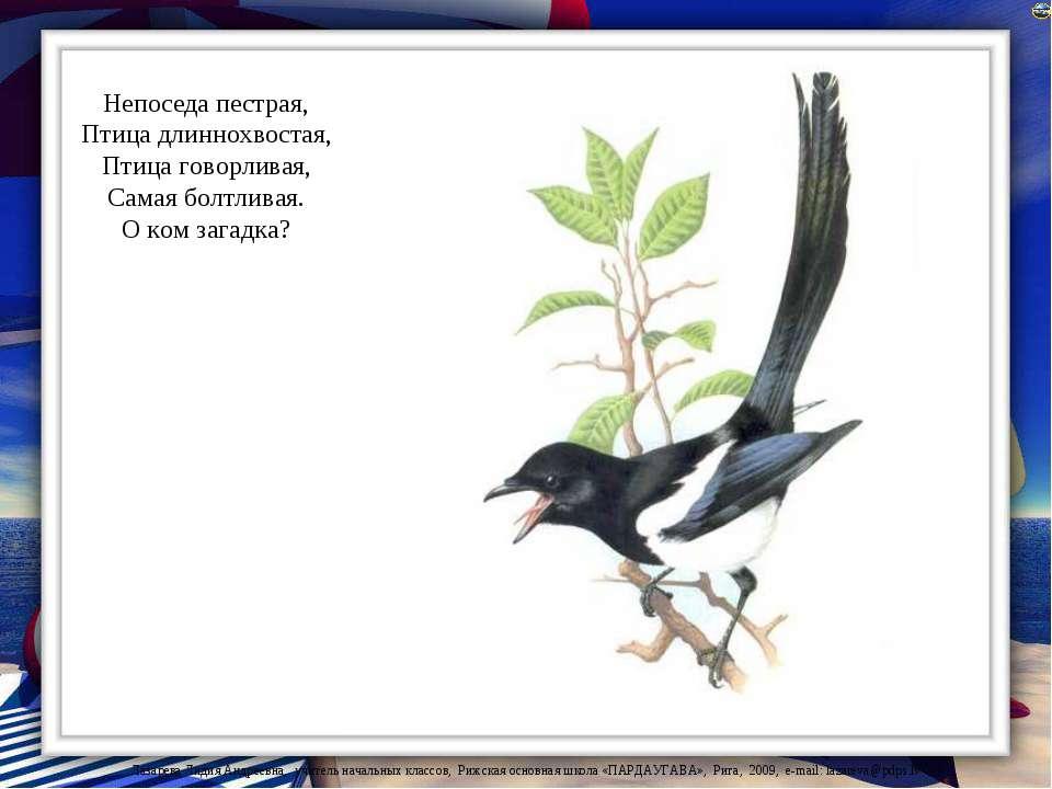 Непоседа пестрая, Птица длиннохвостая, Птица говорливая, Самая болтливая. О к...