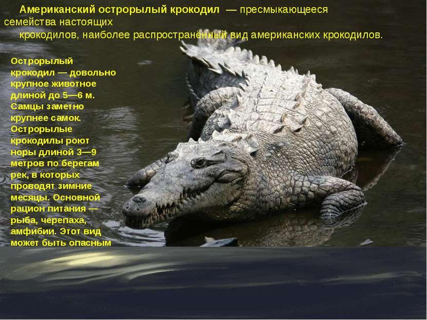 Американский острорылый крокодил — пресмыкающееся семействанастоящих крокод...