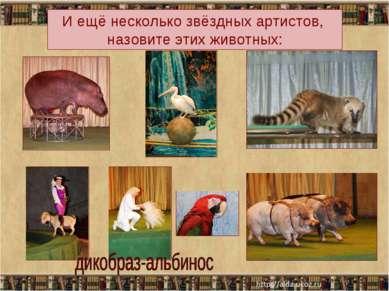 И ещё несколько звёздных артистов, назовите этих животных: