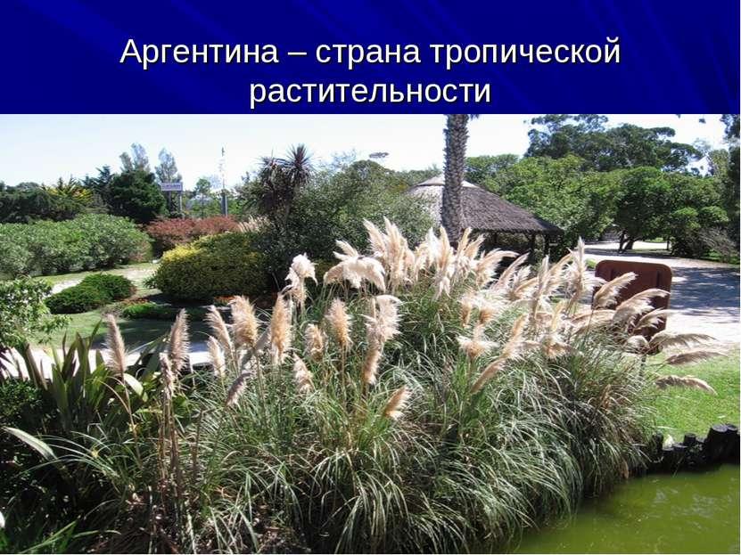 Аргентина – страна тропической растительности