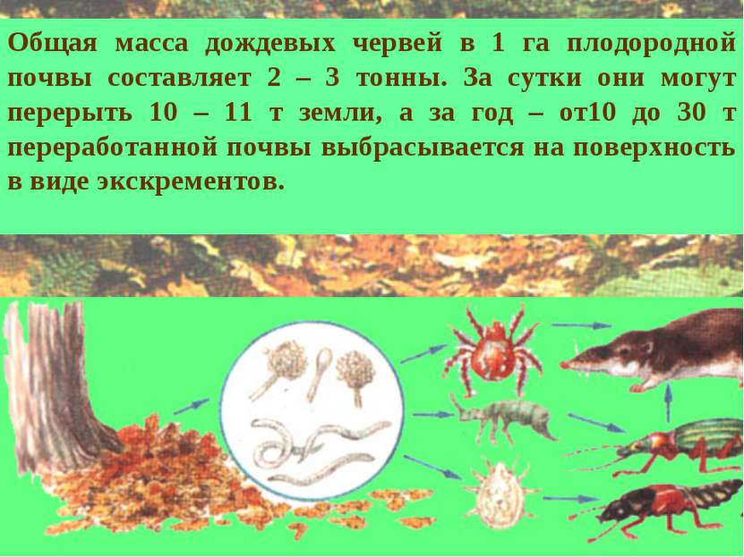 Общая масса дождевых червей в 1 га плодородной почвы составляет 2 – 3 тонны. ...