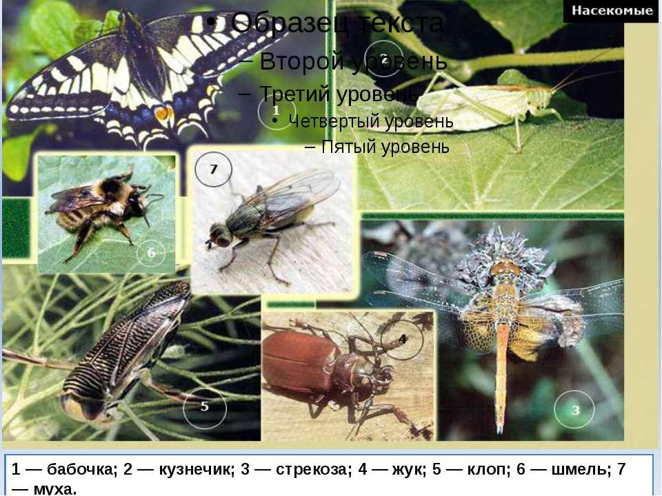 1 — бабочка; 2 — кузнечик; 3 — стрекоза; 4 — жук; 5 — клоп; 6 — шмель; 7 — муха.