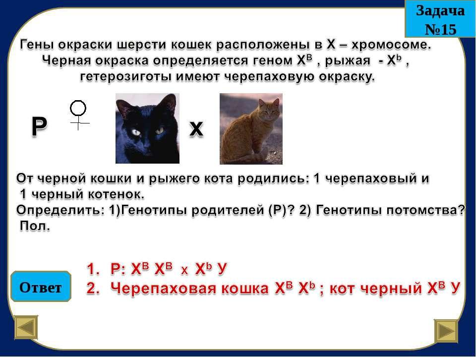 Ответ Задача №15