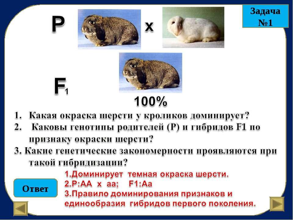 Ответ Задача №1