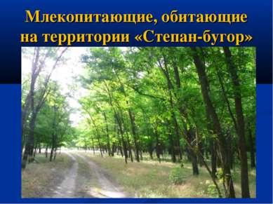 Млекопитающие, обитающие на территории «Степан-бугор»