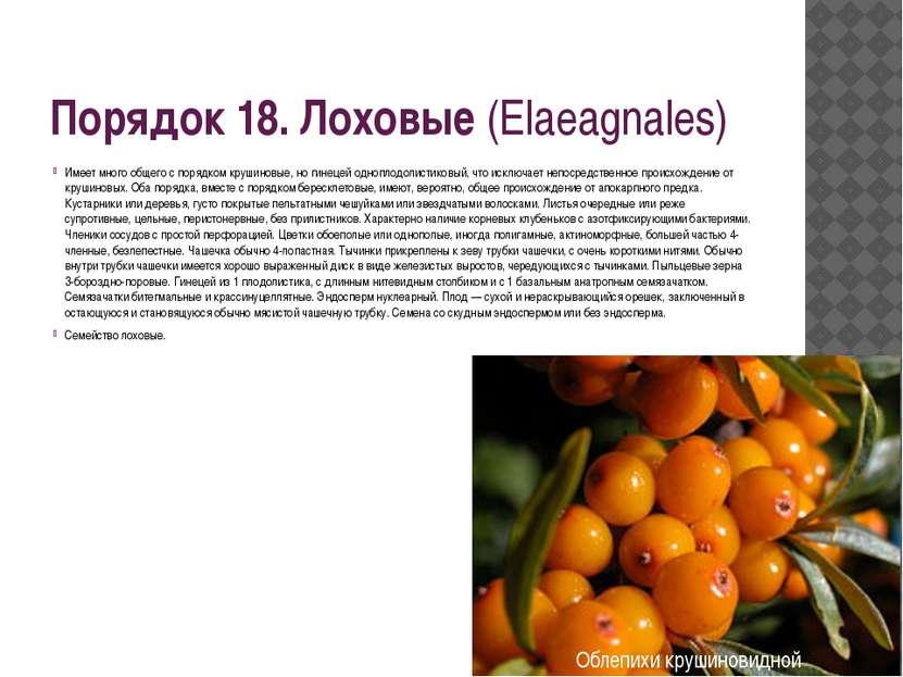 Порядок 18. Лоховые(Elaeagnales) Имеет много общего с порядком крушиновые, н...