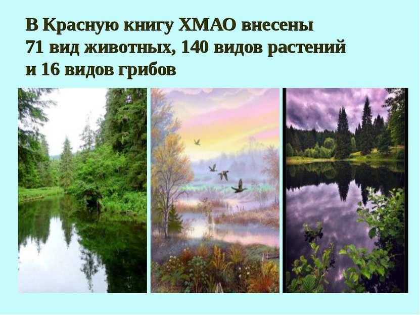 В Красную книгу ХМАО внесены 71 вид животных, 140 видов растений и 16 видов г...