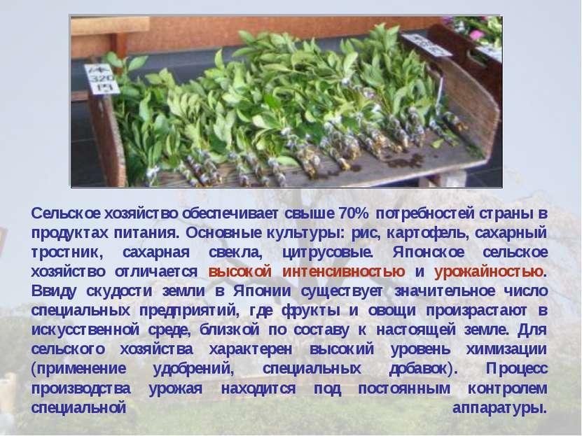 Сельское хозяйство обеспечивает свыше 70% потребностей страны в продуктах пит...