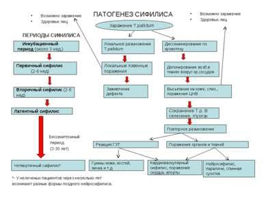Заражение T.pallidum ПАТОГЕНЕЗ СИФИЛИСА Бессимптомный период (3-30 лет) *- У ...