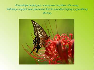 Благодаря диффузии, насекомые находят себе пищу. Бабочки, порхая меж растений...