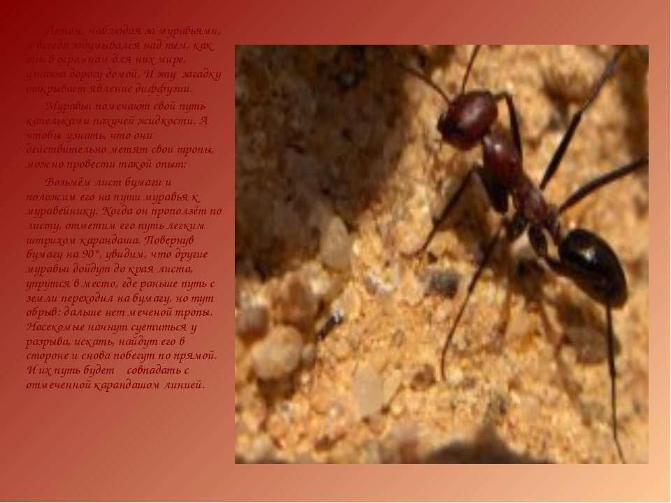 Летом, наблюдая за муравьями, я всегда задумывался над тем, как они в огромно...