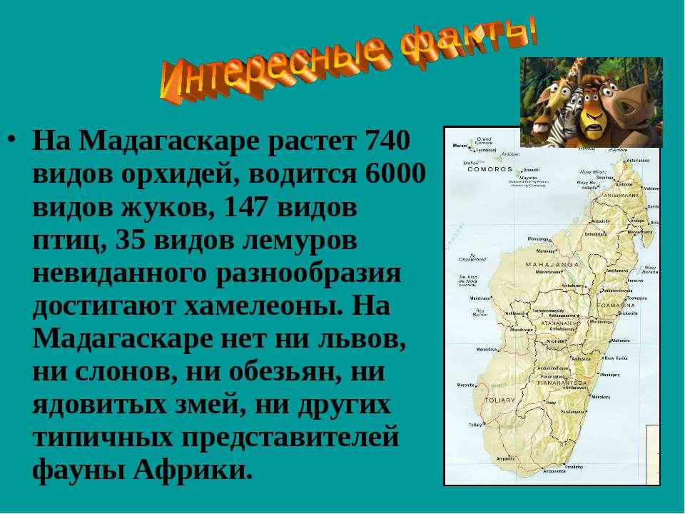На Мадагаскаре растет 740 видов орхидей, водится 6000 видов жуков, 147 видов ...
