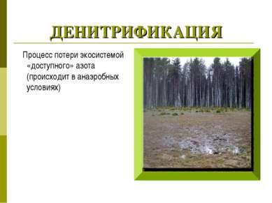 ДЕНИТРИФИКАЦИЯ Процесс потери экосистемой «доступного» азота (происходит в ан...