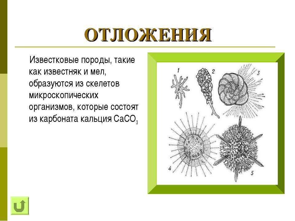 ОТЛОЖЕНИЯ Известковые породы, такие как известняк и мел, образуются из скелет...