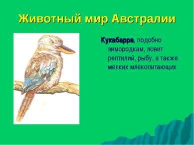 Животный мир Австралии Кукабарра, подобно зимородкам, ловит рептилий, рыбу, а...