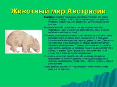 Животный мир Австралии Вомбаты относятся к большому семейству сумчатых. Его д...