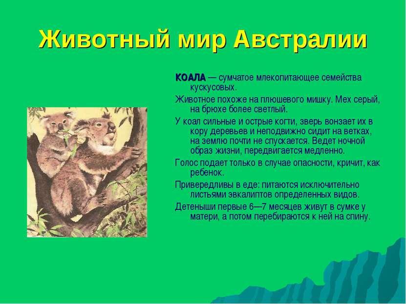 Животный мир Австралии КОАЛА — сумчатое млекопитающее семейства кускусовых. Ж...