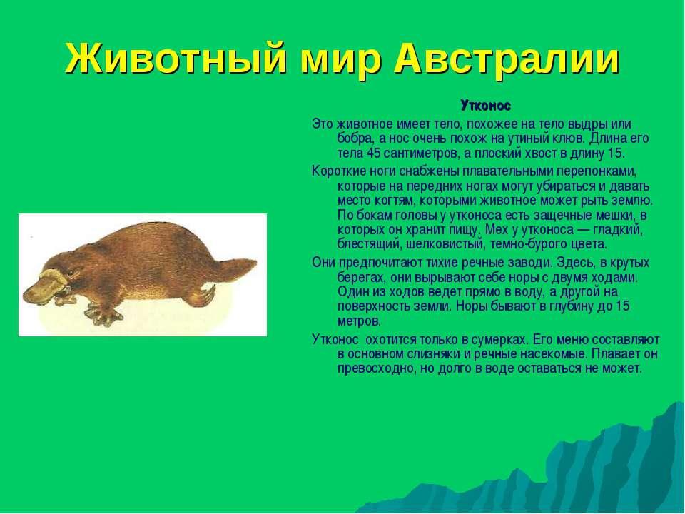 Животный мир Австралии Утконос Это животное имеет тело, похожее на тело выдры...