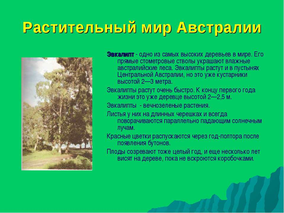 Растительный мир Австралии Эвкалипт - одно из самых высоких деревьев в мире. ...