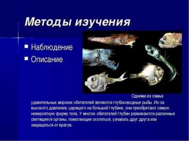 Методы изучения Наблюдение Описание Одними из самых удивительных морских обит...