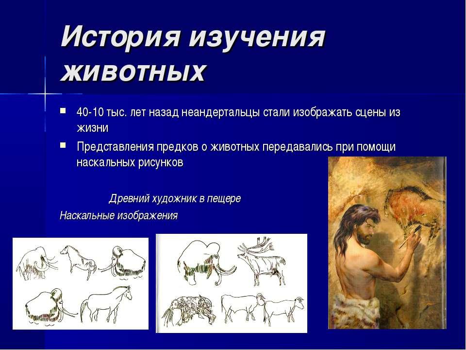 История изучения животных 40-10 тыс. лет назад неандертальцы стали изображать...