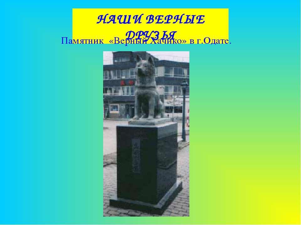 НАШИ ВЕРНЫЕ ДРУЗЬЯ Памятник «Верный Хачико» в г.Одате.