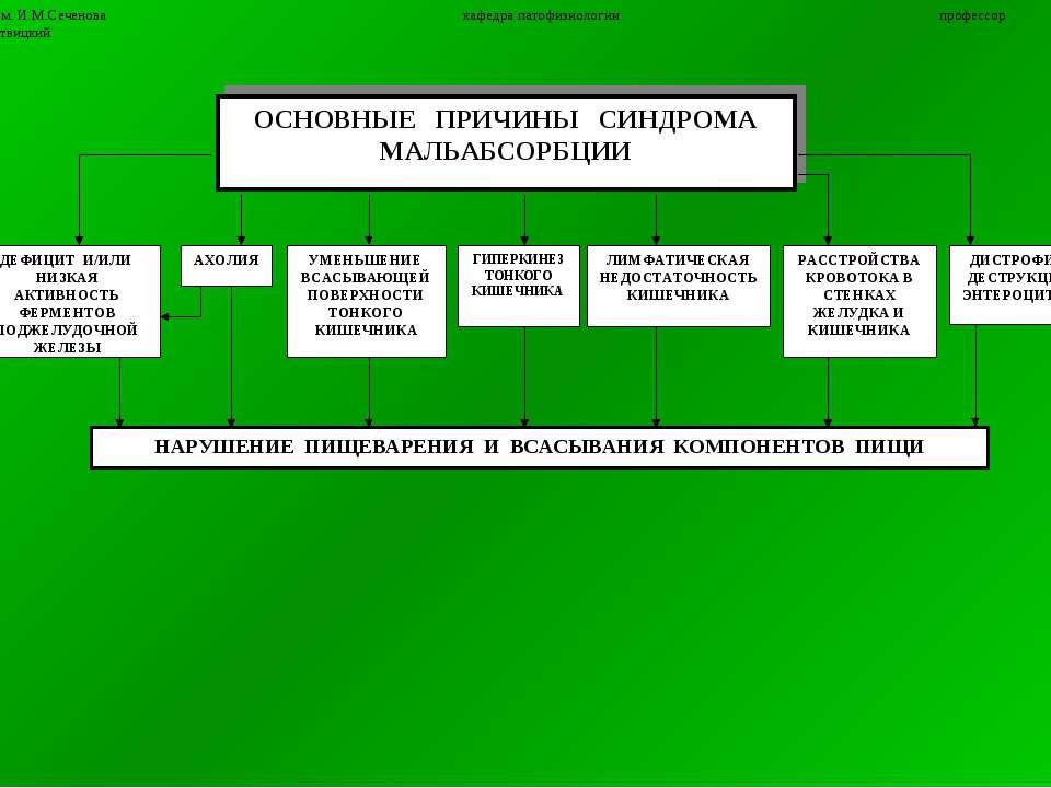 13 ММА им. И.М.Сеченова кафедра патофизиологии профессор П.Ф.Литвицкий