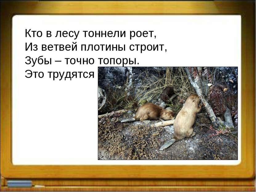 Кто в лесу тоннели роет, Из ветвей плотины строит, Зубы – точно топоры. Это т...