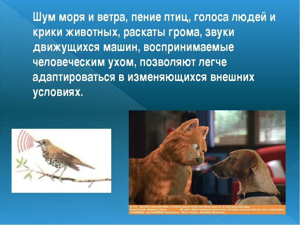 Шум моря и ветра, пение птиц, голоса людей и крики животных, раскаты грома, з...