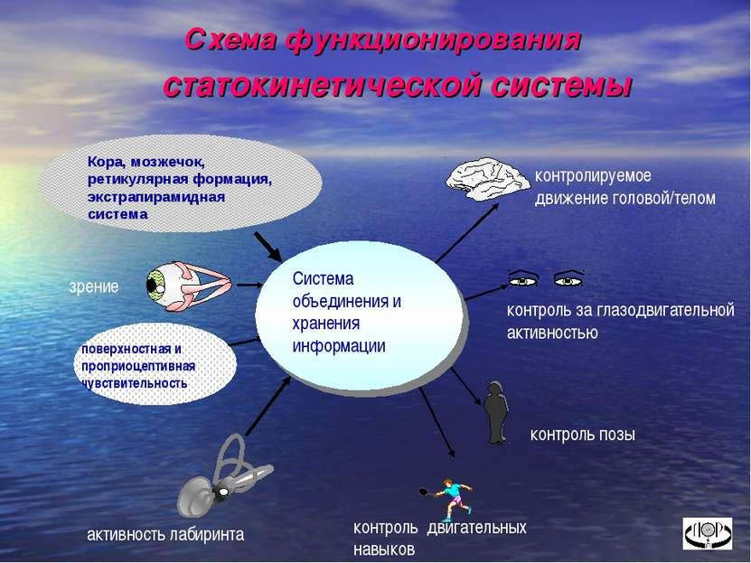 Схема функционирования статокинетической системы Кора, мозжечок, ретикулярная...
