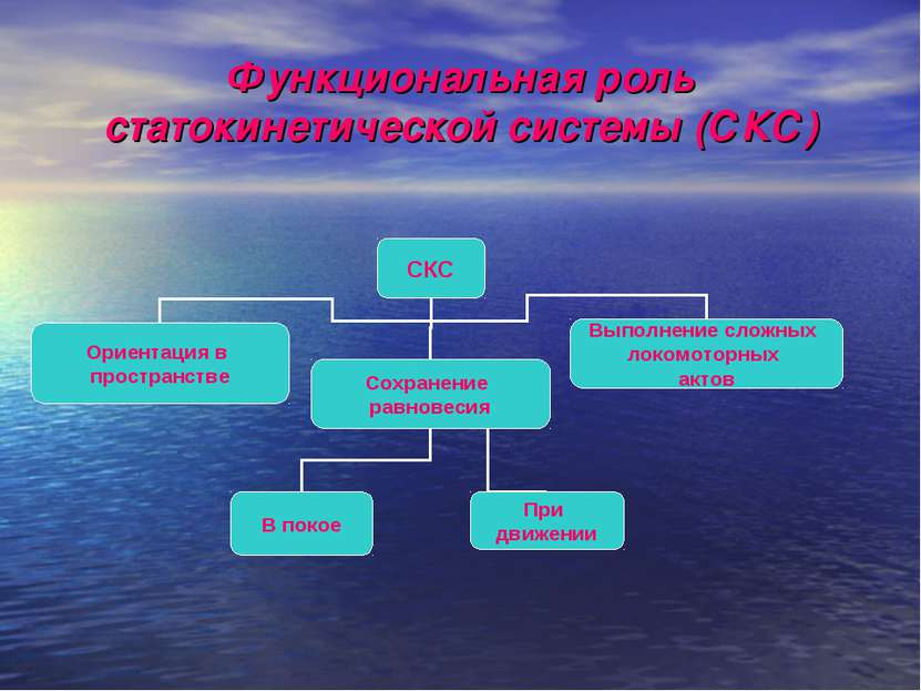 Функциональная роль статокинетической системы (СКС)