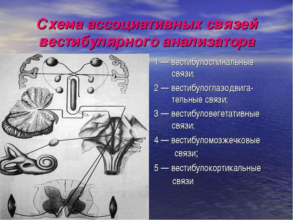 Схема ассоциативных связей вестибулярного анализатора 1 — вестибулоспинальные...