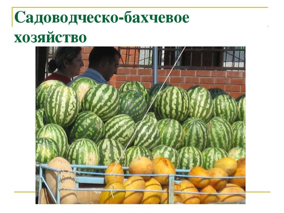 Садоводческо-бахчевое хозяйство