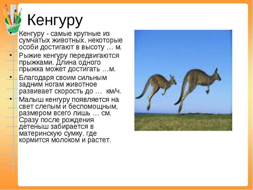 Кенгуру Кенгуру - самые крупные из сумчатых животных, некоторые особи достига...