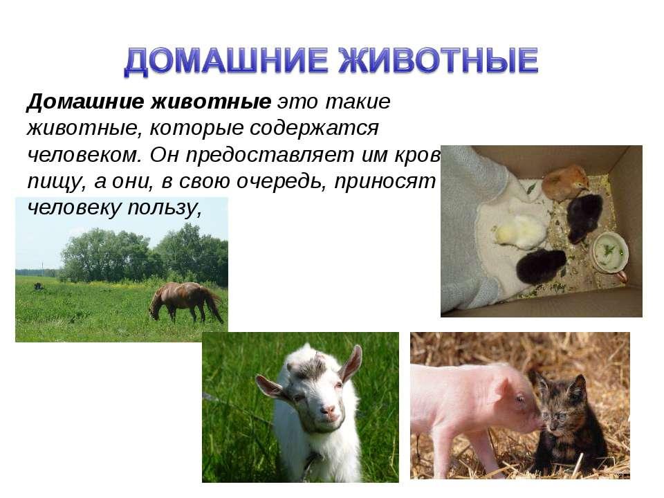 Домашние животные это такие животные, которые содержатся человеком. Он предос...